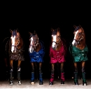 Back on Track - Pferd