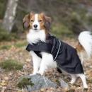Back on Track - Hund