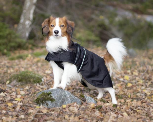 Back on Track Hunde Netzdecke/ Sommerdecke 60 bis 83 cm schwarz