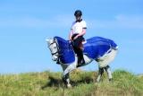 Horseware Amigo Fly Rider Fliegenausreitdecke