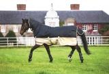 Horseware Amigo Mio All-In-One Turnout heavy navy- tan Winterdecke