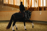 Horseware Rambo Waterproof Competition Sheet black