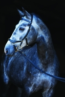 Horseware Rambo Zügel für Micklem Multibridle black