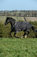 BUCAS Smartex Rain Schwarz Pony 115-120 + Gratis Magic Brush