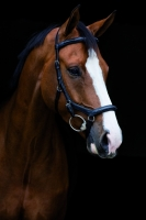 Horseware Rambo Micklem Deluxe Competition Bridle englisches Leder