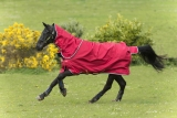 Horseware Amigo Hero ACY Plus lite 0g  mit Halsteil Red/ White