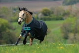 Horseware Amigo Hero 900 D lite 50g Fleece black/ teal